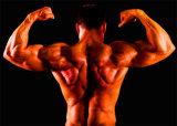 Acétate stéroïde de Boldenone d'hormone de pureté de 99% avec le culturisme