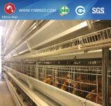 Оборудование фермы цыпленка Breeding с горячей гальванизированной ячеистой сетью для цыпленка яичка
