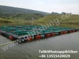 Cage de flottement carrée en plastique de poissons pour l'agriculture de Tilapia