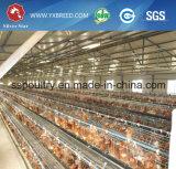 Gabbie del pollo di strato con la strumentazione del pollame per l'azienda agricola dell'Angola