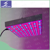 LED 플랜트는 야채와 꽃을%s 가볍게 증가한다