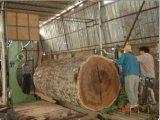 La bande en bois de découpage a vu avec le transport de bride