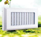 500W LED usado cáñamo médico crecen luces