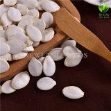 Las semillas de calabaza china blanco como la nieve