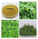 Extrait Gypenosides de Gynostemma Pentaphyllum