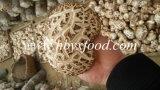 Cogumelo de Shiitake grosso secado da flor branca