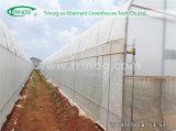 Solo invernadero económico de la película del palmo para la agricultura