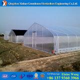 Invernadero hidropónico de la película plástica del túnel
