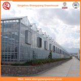 Glaslandwirtschafts-Gewächshäuser für Tomaten/Blumen