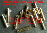 5p 16A impermeabilizan el socket industrial (recto) para el panel montado