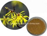 純粋で自然で装飾的な原料のマンサクのエキスの粉10% Hamamelitannin