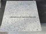 Granito grigio/bianco della lastra poco costosa del granito del granito bianco del Kashmir