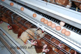 De Machine van de Batterijkooi van de Laag van de kip
