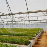 중국 PE Polytunnel 온실