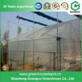 Casa verde Single-Layer de película plástica da estufa do projeto moderno