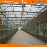 Commercial Use를 위한 Venlo Glass Greenhouse