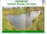 Additivo alimentare di Unigrow per l'allevamento di acquicoltura