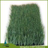 フットボールの草のカーペット