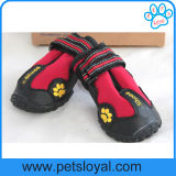 Únicas grandes sapatas antiderrapantes ásperas do cão do produto do cão de animal de estimação