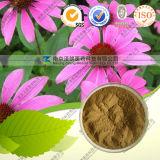 Het Natuurlijke Echinacea Purpurea Uittreksel van 100%