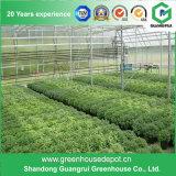 花および野菜のための商業鉄骨構造のポリカーボネートシートの温室
