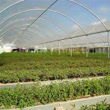 방수 PE 덮개를 가진 정원 온실