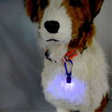 Tag claro de piscamento do colar da luz de segurança piscar do colar do diodo emissor de luz do cão de animal de estimação