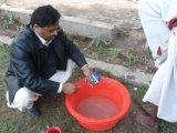 Bio fertilizante de Unigrow em vegetais do melão