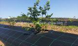 HDPEの/PPの地被植物の/Weedマットまたは反Weedのネット
