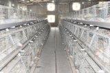 판매 (유형)를 위한 가축 농장 보일러 닭 감금소