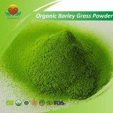 Qualitäts-organisches Gersten-Gras-Puder