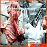 ライン食肉処理場機械装置を屠殺している牛