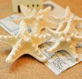 Forcelle reali delle stelle marine dell'oceano