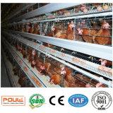 Cage de poulet d'oeufs de couche de ferme avicole de technologie de Poul (galvanisation chaude)