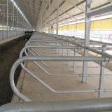 Стойло коровы оборудования поголовья свободно с гальванизировать слоем