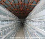 Camps de poulet de bétail pour la couche