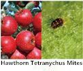 60%の動的機器の高い効果の殺虫剤のPyridaben Dinotefuranの互いに作用し合うエージェント広いスペクトルの殺虫剤