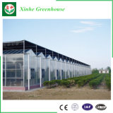 농업 다중 경간 온실 폴리탄산염 구렁 장