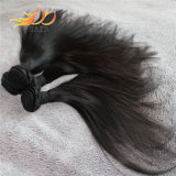 Tessuto Burmese dei capelli umani del Virgin di alta qualità diritta 8A