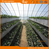 Planting를 위한 Plastic Film Covered에 태양 Greenhouse