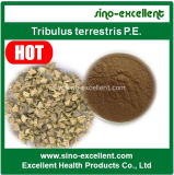 Medicina del extracto de la planta de Terrestris del Tribulus para la energía sexual