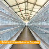 높 표준 Q231 철강선 물자 놓는 암탉 층 또는 계란 닭을%s 유형 가금 장비