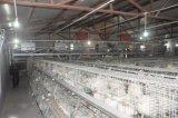 Клетка цыпленка бройлера фермы поголовья для сбывания (тип)