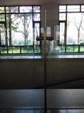 [هيغقوليتي] جديدة تصميم [ستينلسّ ستيل] يليّن درابزين زجاجيّة [كز046]