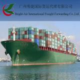 Serviços de frete do mar do armazenamento da expedição que enviam de Hong Kong a Guangzhou