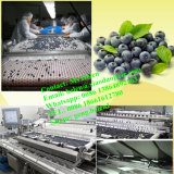 Máquina de classificação automática de blueberry / Blueberry Grading Weighing Packing Line