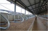 Я сделаны в Cowshed стальной структуры Китая (SSA-001)