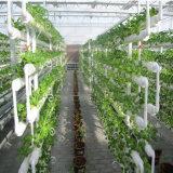 농업 온실을%s 상업적인 수경법 온실