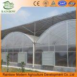 Túnel Multispan Invernadero Agrícola Invernadero Galvanizado Invernadero