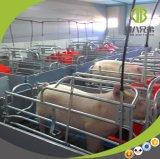 Het Werpen van het varken het Gebruik van het Krat voor Moderne Varkensfokkerij